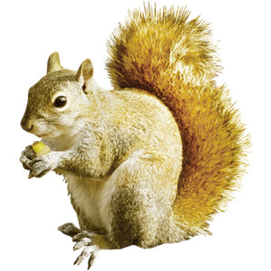 lmurphy-charm-ep_squirrel.png - Squirrel HD PNG