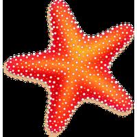 Starfish PNG - 15931