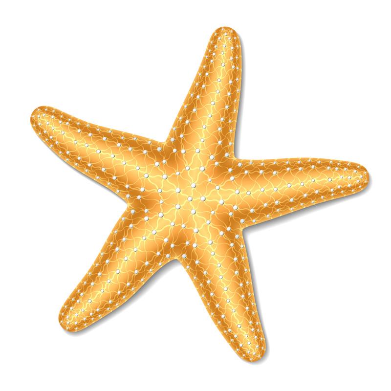 Starfish PNG - 15930