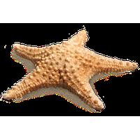 PNG File Name: Cute Starfish