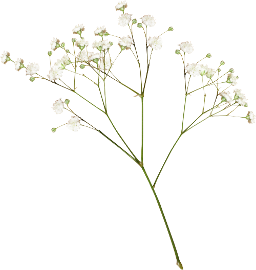 Stem Of A Plant PNG-PlusPNG.com-500 - Stem Of A Plant PNG