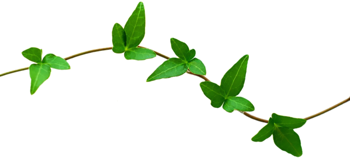 Stem Of A Plant PNG - 159786