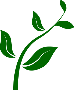 Stem Of A Plant PNG - 159771