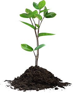 Our free evaluation identifies the condition of all of the woody plants  (any plant or tree with a woody stem), the soil that supports them, PlusPng.com  - Stem Of A Plant PNG
