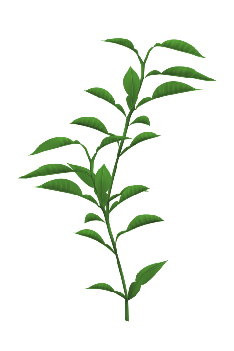 Stem Of A Plant PNG