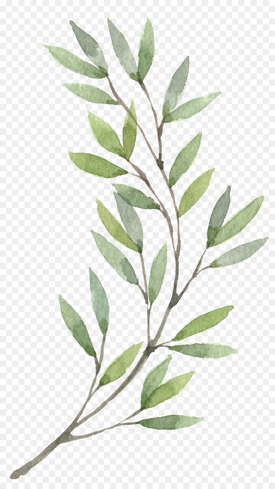 Stem Of A Plant PNG - 159778