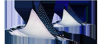 Stingray PNG - 75539