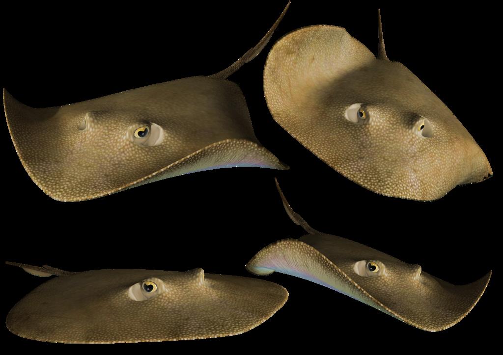 Stingray PNG