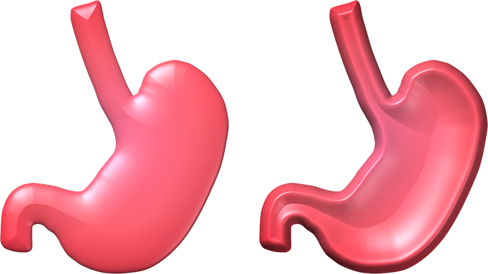 Stomach, Health, Empty, Full, 3D, 3 D, Organ, Human - Stomach PNG HD