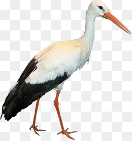 Stork HD PNG