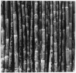 Sugar Cane PNG Black And White - 59656