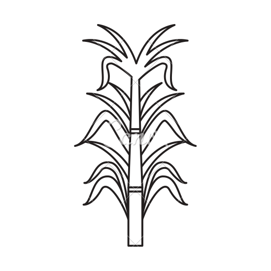 Sugar Cane PNG Black And White - 59649