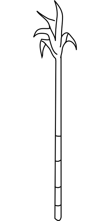 Sugar Cane PNG Black And White - 59652