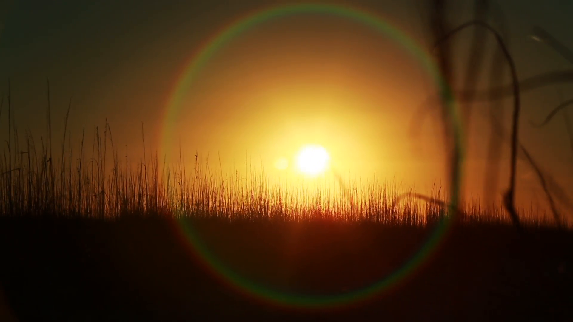 Sun shines through wheat grass, with lens flare. Steadicam, shot in 1080p HD.  Stock Video Footage - VideoBlocks - Sun Shining PNG HD