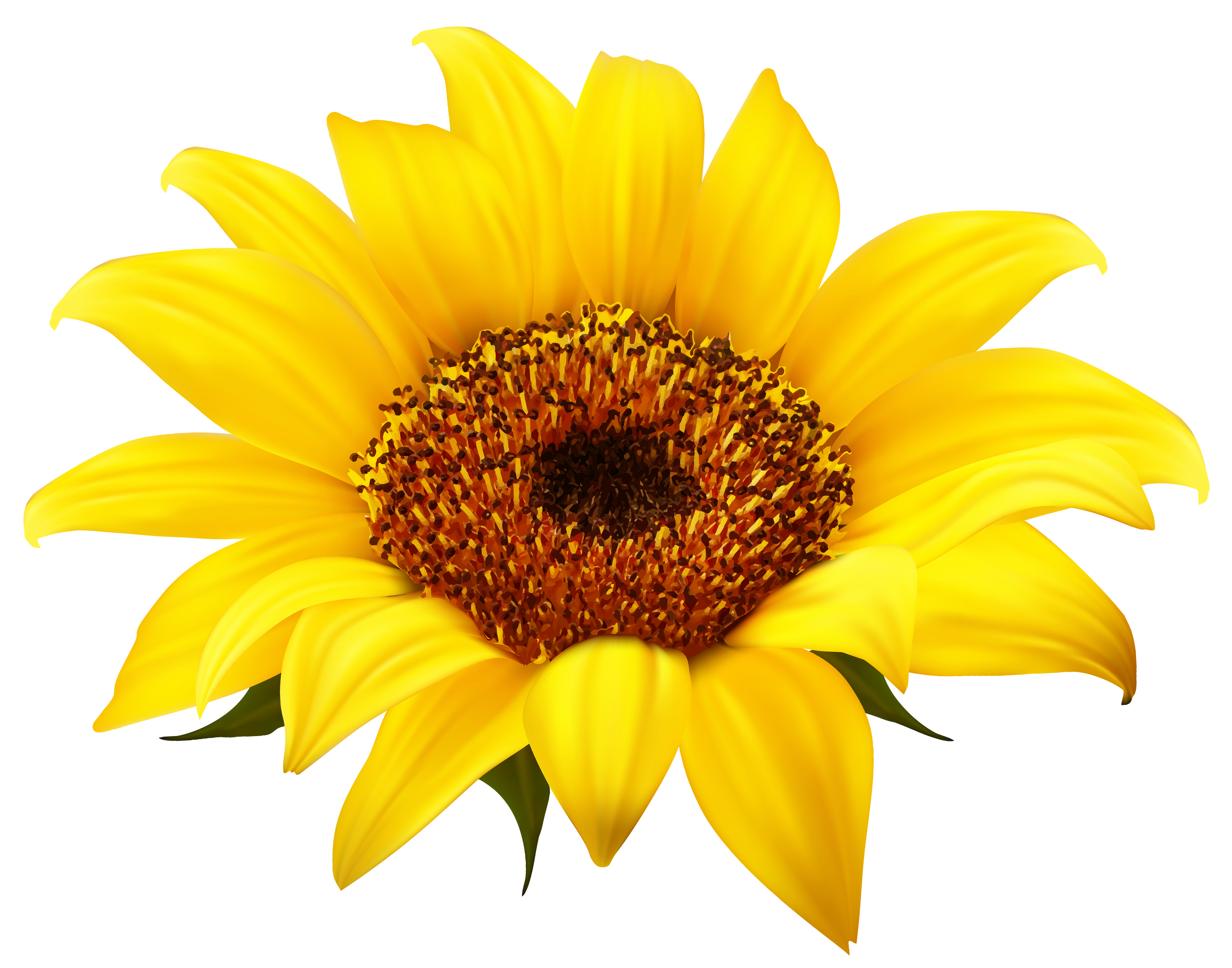 Sunflowers PNG - 6596