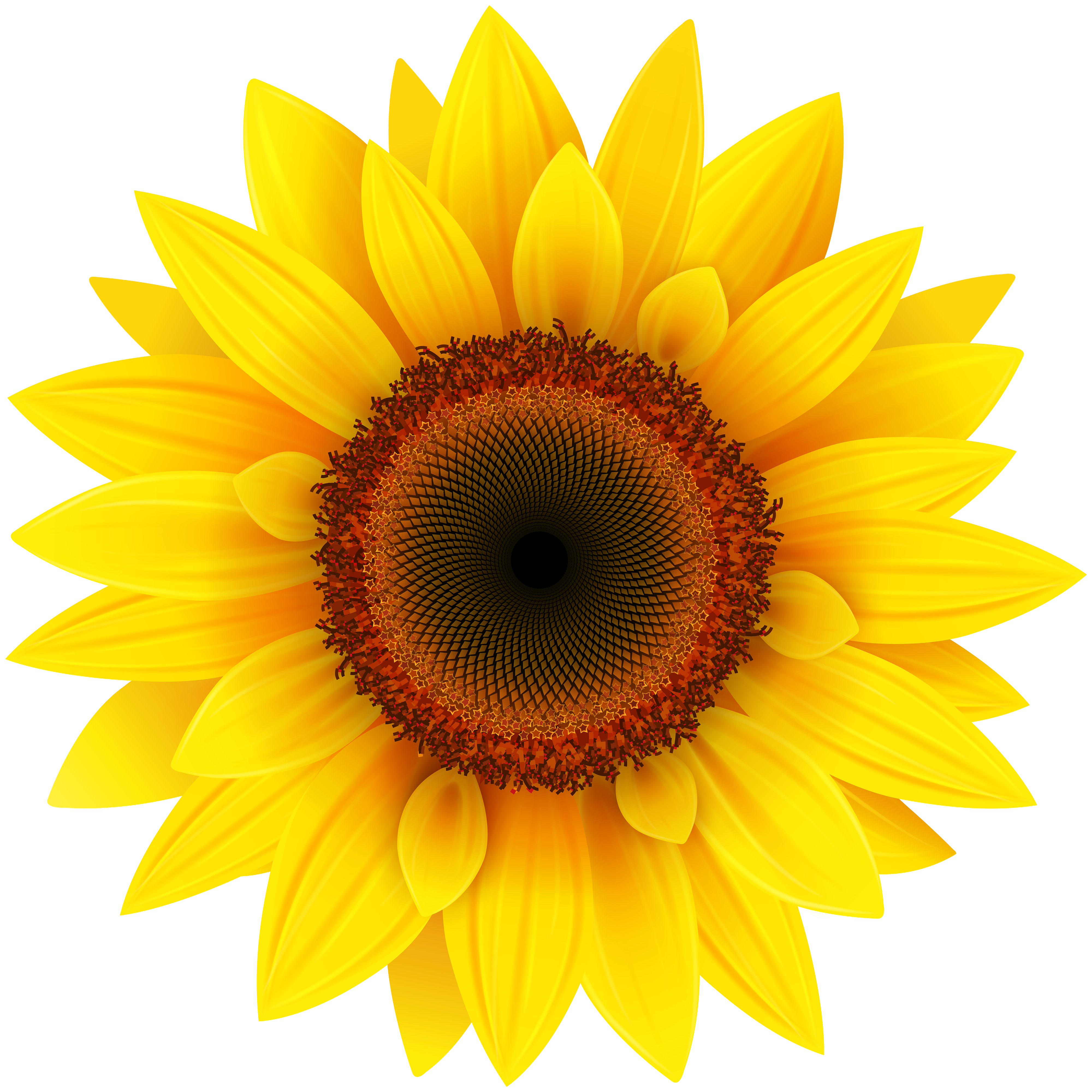 Sunflowers PNG - 6591