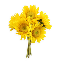 Sunflowers Png PNG Image - Sunflowers PNG
