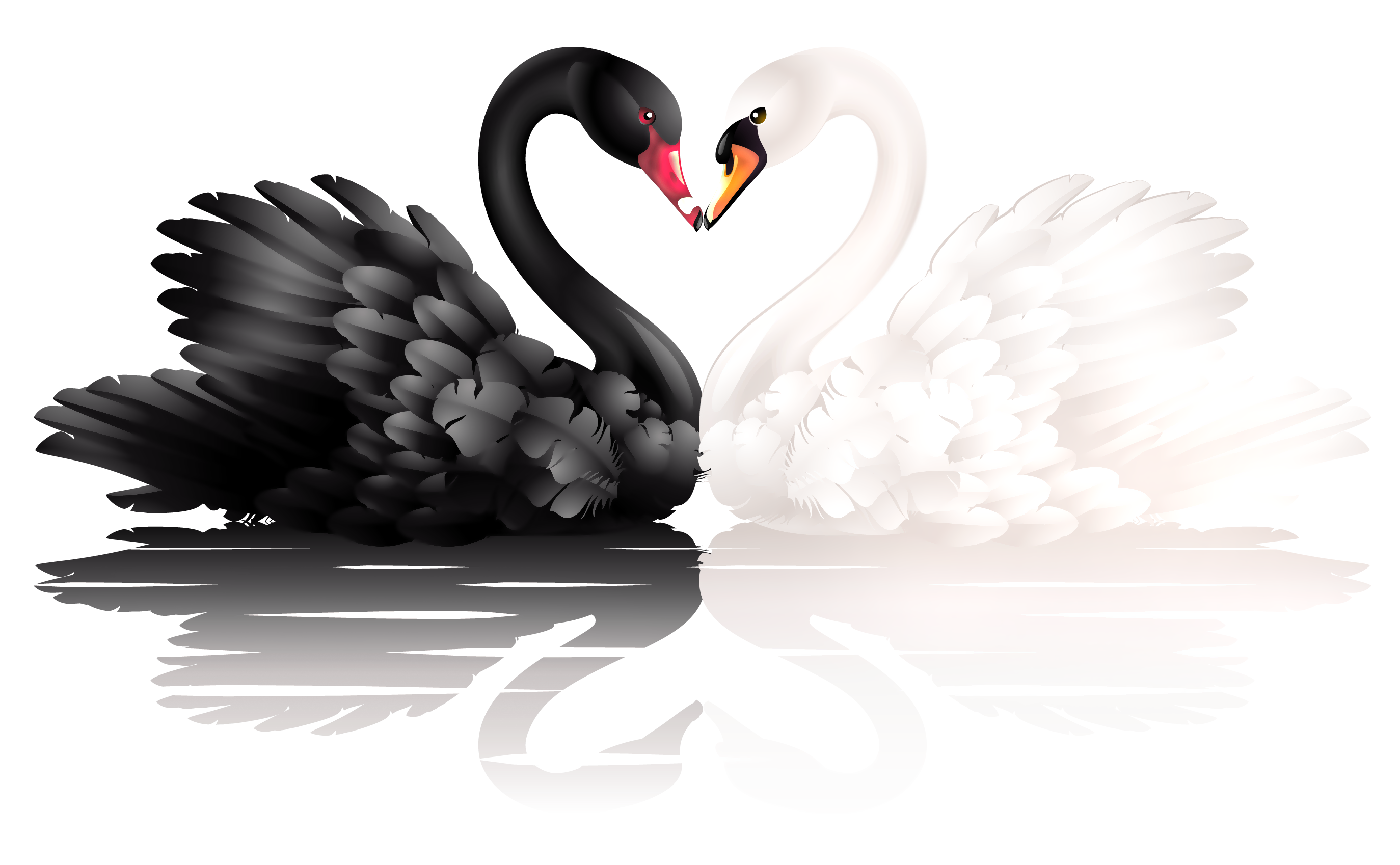 Black and white swan PNG - Swan PNG