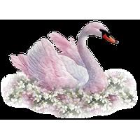 Swan PNG - 21496