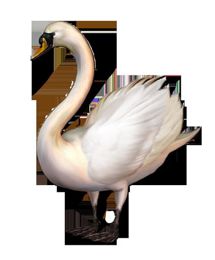 Swan PNG - 21498
