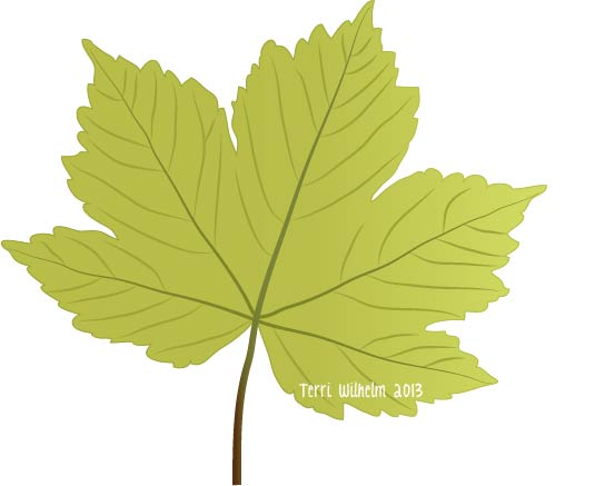 pin Drawn leaf sycamore #6 - Sycamore Tree Leaf PNG