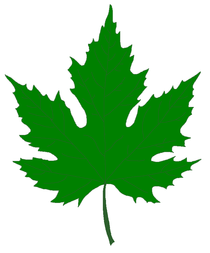 Pin Leaf Clipart Sycamore Tree 10