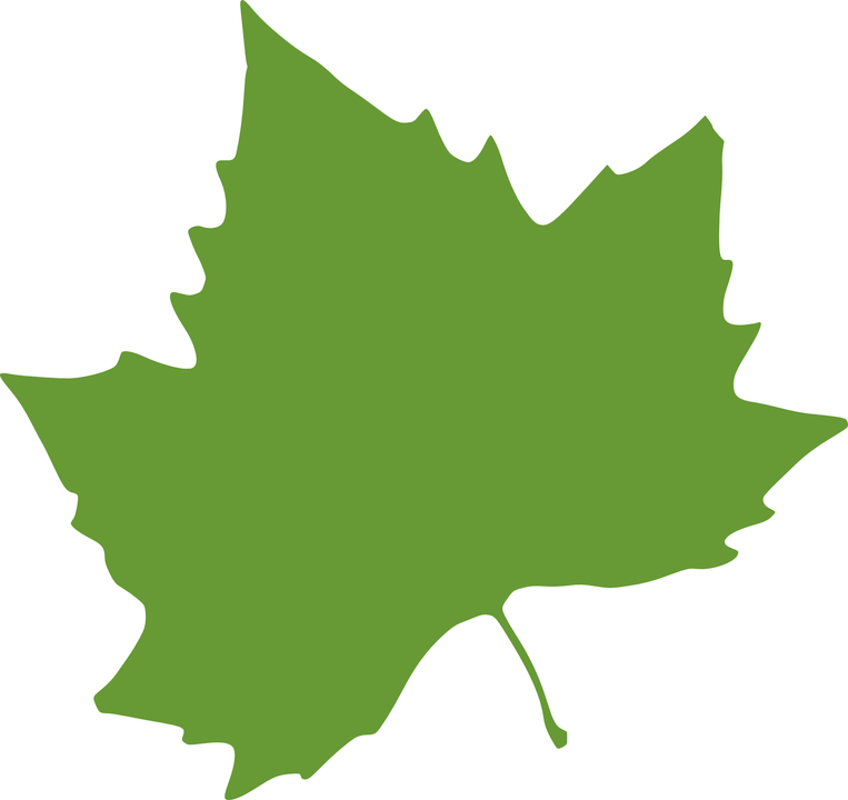 pin Leaf clipart sycamore tree #9 - Sycamore Tree Leaf PNG