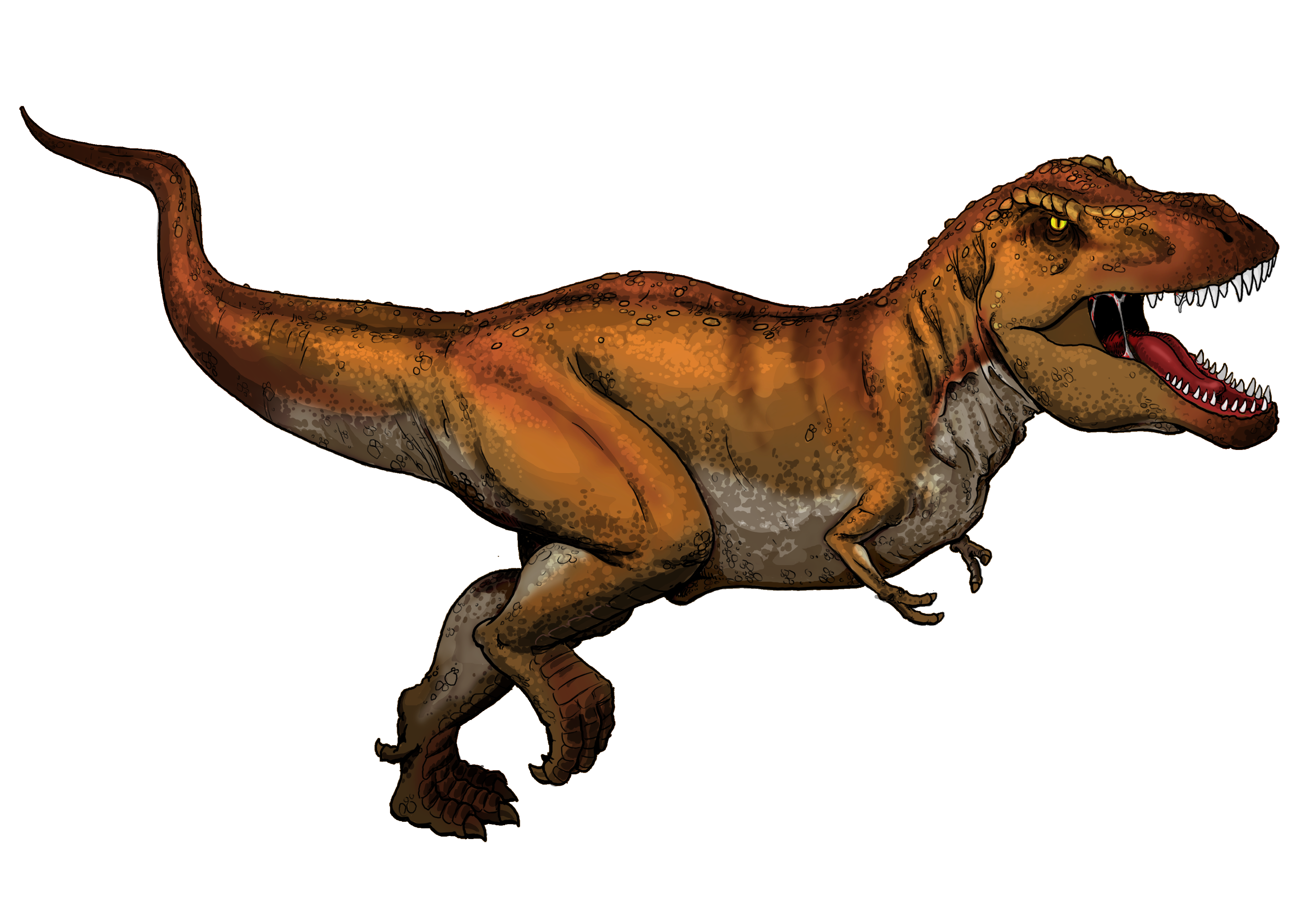 File:Tyrannosaurus Rex colored.png - T Rex Dinosaurs PNG