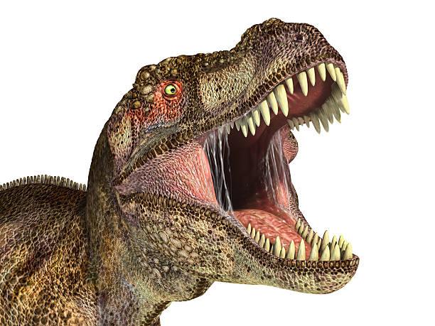 T Rex Head PNG - 76385