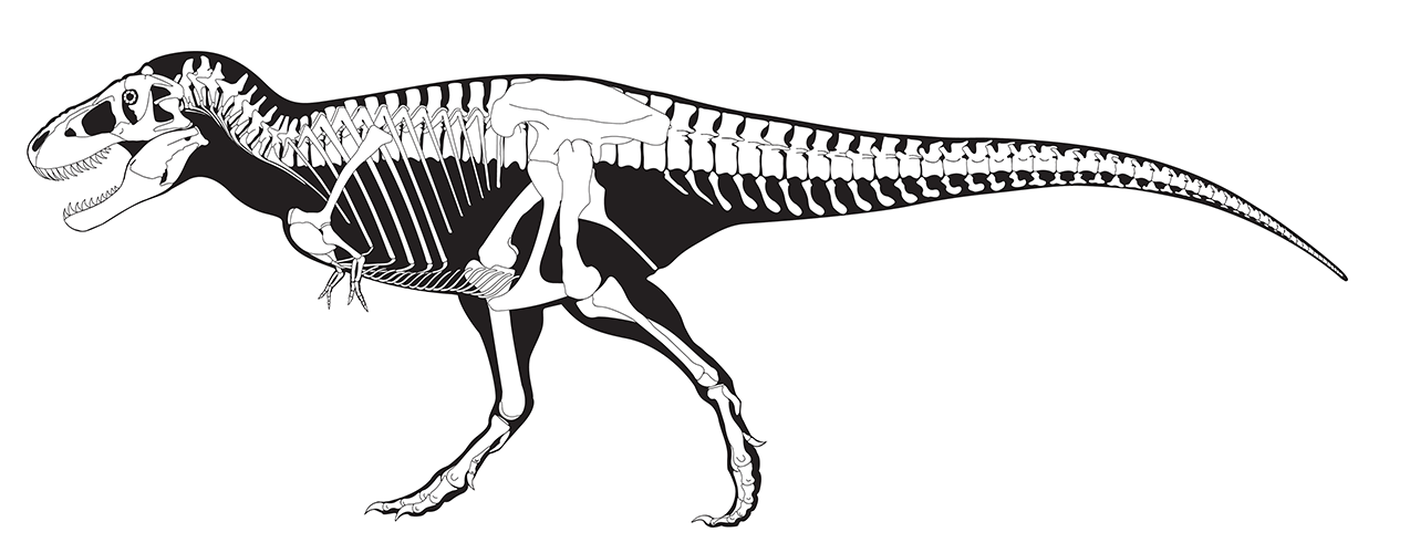 Black and white drawing of The Nationu0027s T. rex, one of the largest and - T Rex PNG Black And White