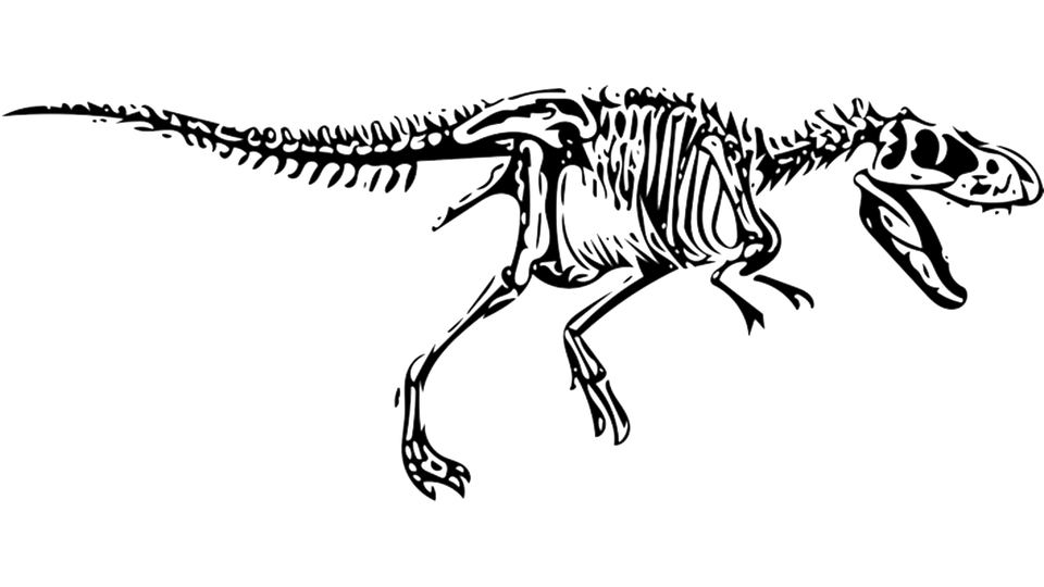 Dinosaur, T-Rex, Tyrannosaurus, Fossil - T Rex PNG Black And White
