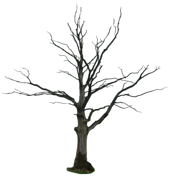 dead tree png - Taking Care Of Plants PNG Black And White