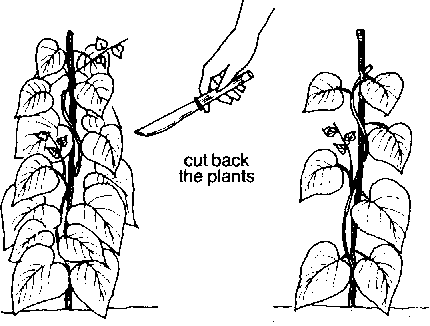 If you see that the plants are not being wet or washed by dew or rain, cut  them back. - Taking Care Of Plants PNG Black And White