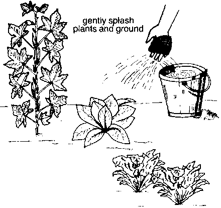 Then, dip your hand with the cloth into the bucket of water and gently  splash the plants and the ground. - Taking Care Of Plants PNG Black And White