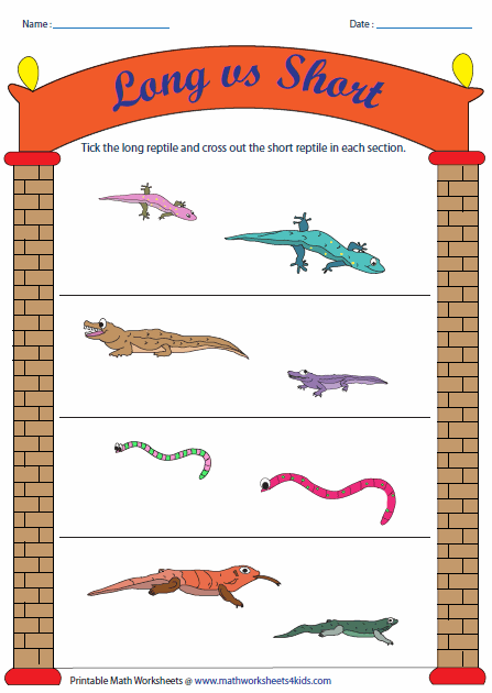 Long vs Short: Reptile Theme - Long And Short Objects PNG - Tall And Short Objects PNG