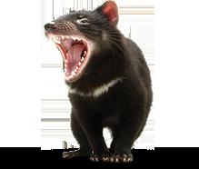 Tasmanian Devil PNG HD - 125698