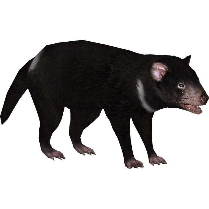 Tasmanian Devil PNG HD - 125689