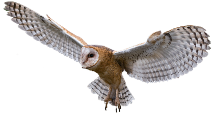 Reproduction/Inheritance: Better survival means longer lifetime which leads  to reproduction/inheritance. Environmental pressures. Tawny owls PlusPng.com  - Tawny Owl PNG