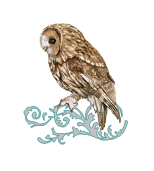 Tawny Owl by refined-serafina PlusPng.com  - Tawny Owl PNG