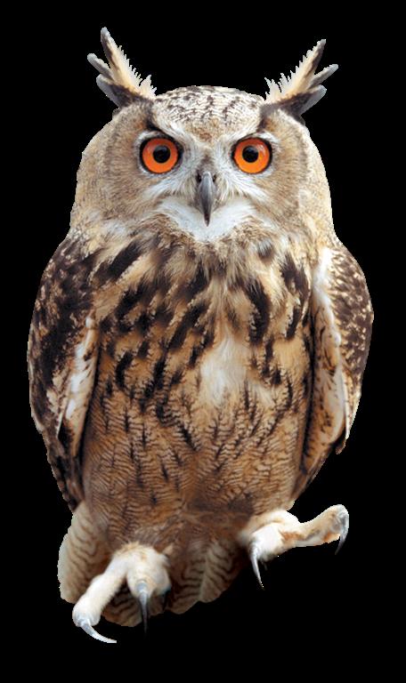 Tawny owl · OWL02_PR_HPE6.png - Tawny Owl PNG