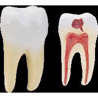 Similar Teeth PNG Image - Teeth PNG HD