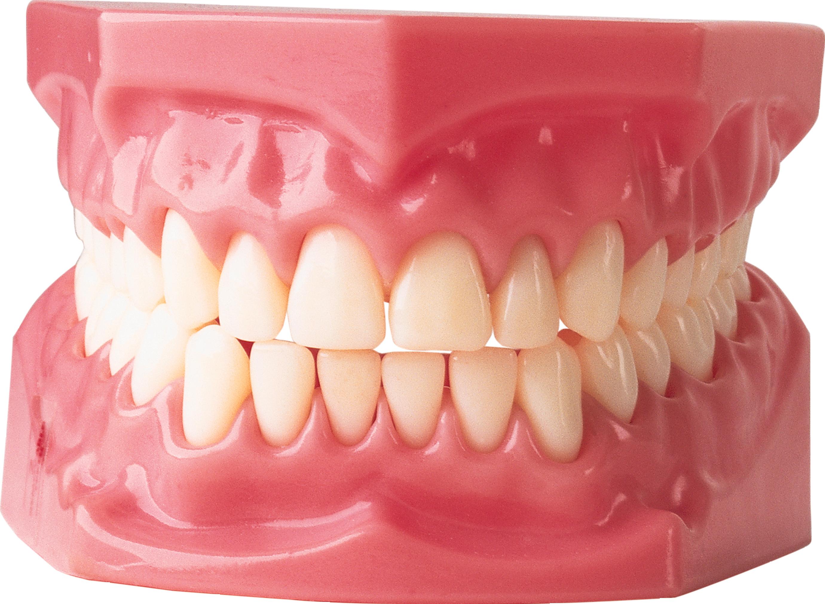 Teeth PNG - 18647