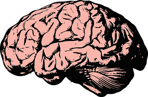 Brain, Think, Knowledge, Mind, Science - Thinking Brain PNG HD