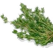 Thymian ist nicht nur eine interessante Gewürzpflanze, sondern auch eine  wichtige Heilpflanze im Bereich Husten und Desinfektion. - Thymian PNG