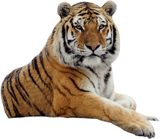 Tiger Free Png Image PNG Image - Tiger HD PNG