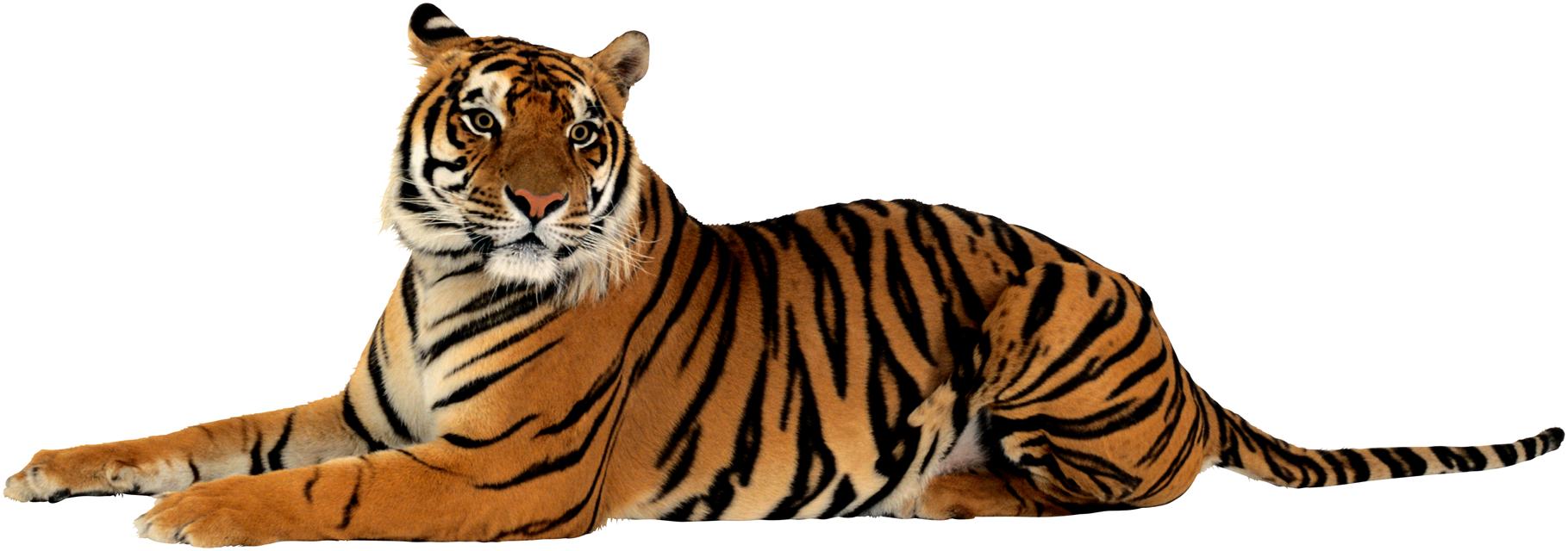 Tiger PNG HD Quality - Tiger HD PNG