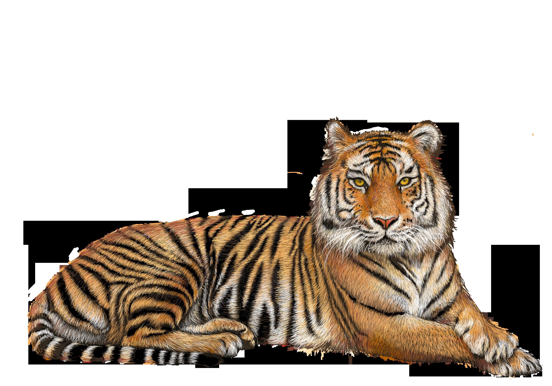 Tiger PNG - 5553