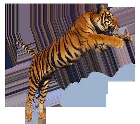 Tiger Png Image #39182 - Tiger PNG