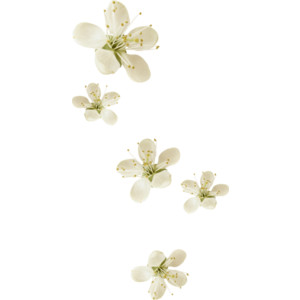 Tiny Flowers PNG - 60128