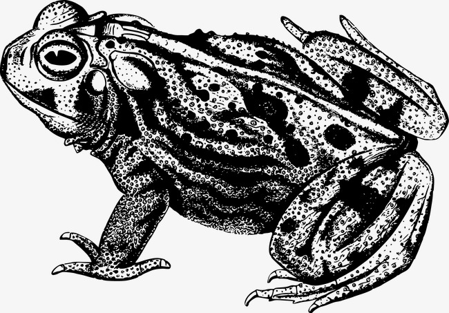 Black and white vector material frog, Frog, Toad, Animal Free PNG and Vector - Toad PNG Black And White